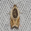 Hodges#3367 - Ancylis burgessiana