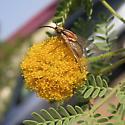 Phthiriinae