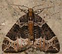 small phoenix - Ecliptopera silaceata