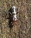 Small Wasp