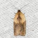 Robinson's Acleris Moth? - Acleris fragariana