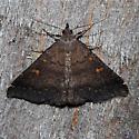 Smoky Tetanolita Moth? - Tetanolita mynesalis