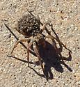 Mother spider with spiderlings.   - female