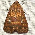 Mobile Groundling Moth - Hodges #9693 - Condica mobilis