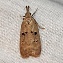 Moth observed 5-16-2019 10:12 pm south Tarrant County, Texas  - Dichomeris glenni
