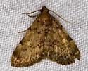 Moth - Idia aemula