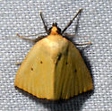 Black-bordered Lemon Moth  - Marimatha nigrofimbria