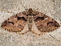 Variable Carpet - Hodges#7329 - Anticlea vasiliata