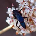 Spider wasp? - Aporus