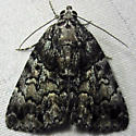 False Underwing - Hodges#8721 - Allotria elonympha