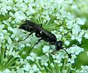 Digger Wasp - Lyroda subita