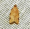 Moth - Clepsis virescana