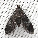 Elophila tinealis - Hodges #4754 - Elophila tinealis