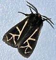 White-striped Moth - Apantesis figurata