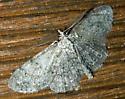 Geometridae - Gray - Protoboarmia porcelaria - male