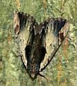 Moth ID Request - Catocala ultronia