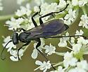 Spider Wasp12 - Anoplius - female