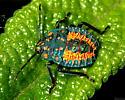 Bug Nymph - Apoecilus