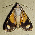 Hodges #8878.1 - Little lined Underwing ? - Catocala amica-lineella
