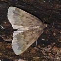 Rotting tree dweller 34 (moth) - Idia