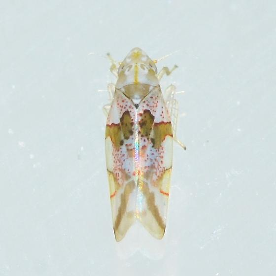 tiny white hopper - Hymetta