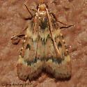 Pink-masked Pyralid Moth - Hodges#5512 - Aglossa disciferalis
