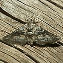 Moth - Eubarnesia ritaria