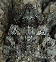 moth 2 - Catocala