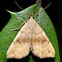 Phalaenostola eumelusalis