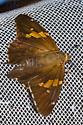 skipper not well - Epargyreus clarus