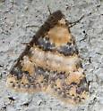 Unidentified Moth #2 - Allerastria albiciliatus