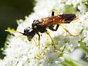 Sawfly? - Tenthredo maxima - female