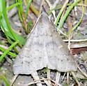 moth A - unident