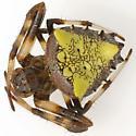 Which Orb? - Verrucosa arenata