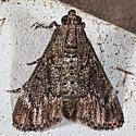 Moth unknown
