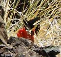 is this Papilio indra?  - Papilio