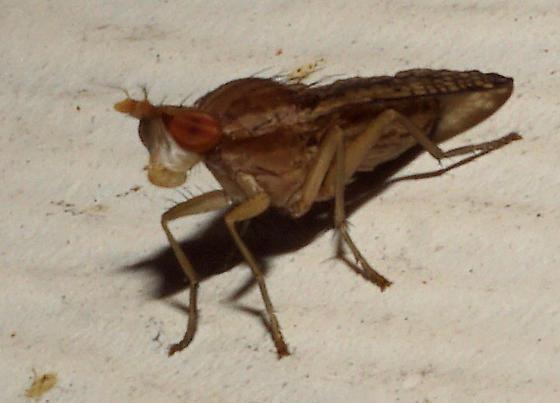Unidentified bug
