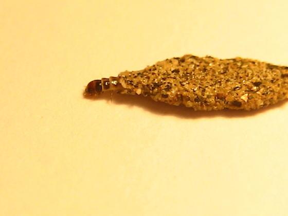 Pod Creature - Phereoeca uterella