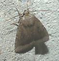Amphipyra glabelle - Amphipyra glabella - male