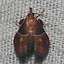 The Amazon Queen - Hodges#5555 - Penthesilea sacculalis