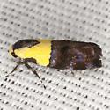 Yellow-vested Moth - Hodges #1026 - Rectiostoma xanthobasis