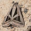 Callistege triangula