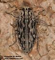 Chrysobothris woodgatei