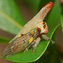 oak treehopper - Platycotis vittata - female