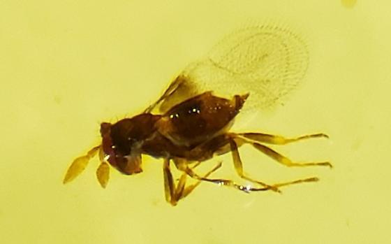 Unknown Wasp?