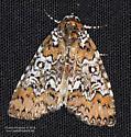 Moth - Cerma cora