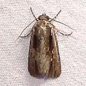 ID Request - Sympistis atricollaris