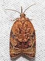 Platynota flavedana - female