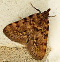 Moth - Aglossa pinguinalis