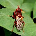 Red Fly - Myopa